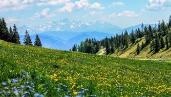 yellow, field, flowers-3123271.jpg